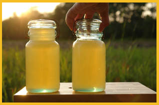 no 1 raw white honey